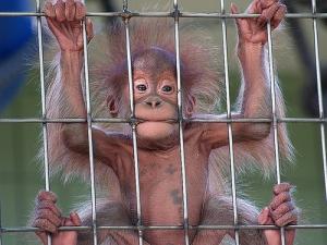 monkeyzooborn
