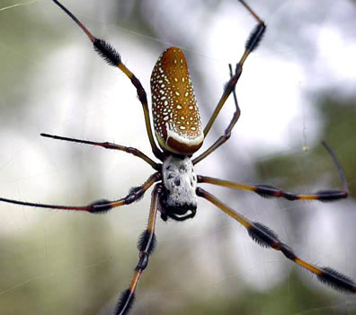 Mr. Banana Spider is not my friend.