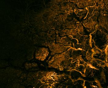 tree-at-night-dscn3032