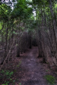 the-dark-forest-path
