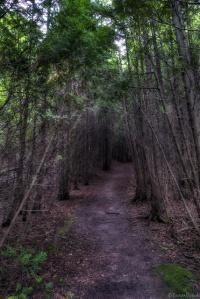 the-dark-forest-path
